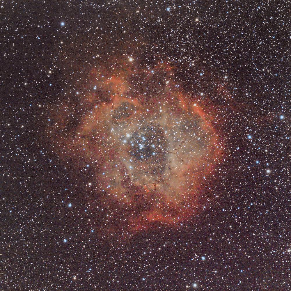 rosette-31mars2021_v4-gradient.jpg.27be49c53574bbec0079a3622cbb08bb2.jpg